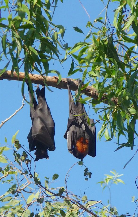 2.bats