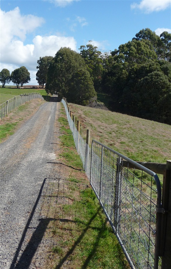 20.new fence