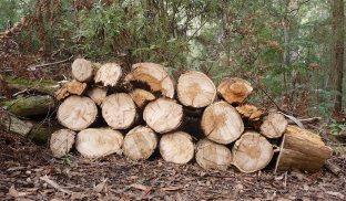 11.wood7
