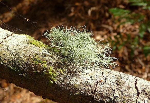 15.lichen