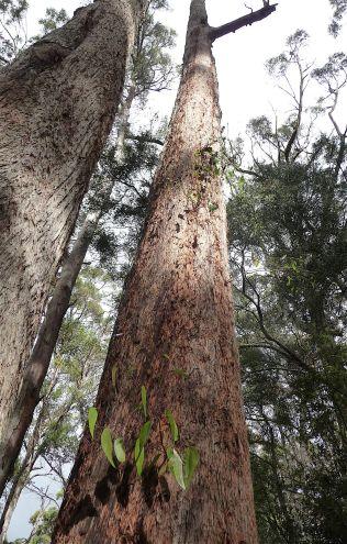 17.undead tree1