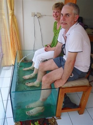 Fish Spa, Sanur, Bali, November 2012