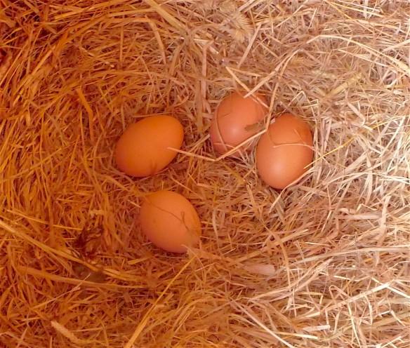 22.eggs