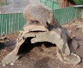 34.wombat4