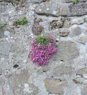 41.flowers5