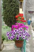 44.flowers8