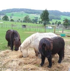 56.ponies