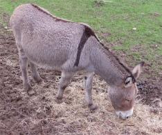 57.donkey1