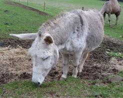58.donkey2