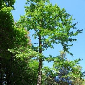 21.tree