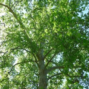 22.tree