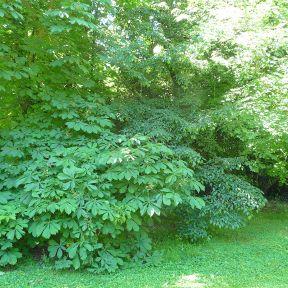 23.shrub