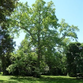 24.tree