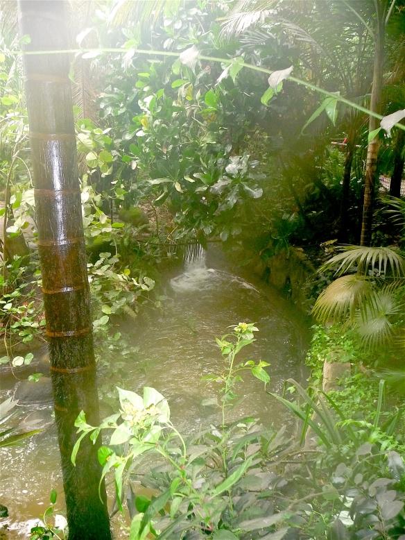 5.rainforest biome