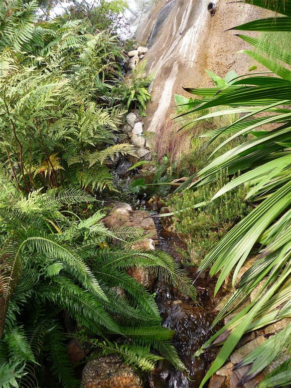 6.rainforest biome