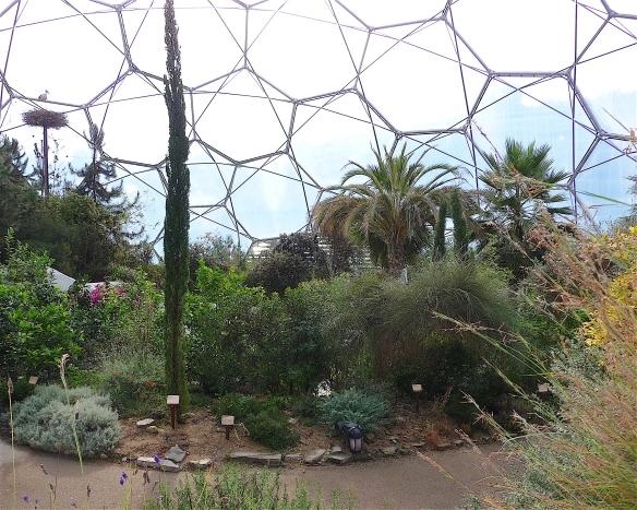 7.mediterranean biome