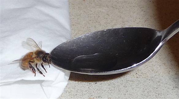 1.bee