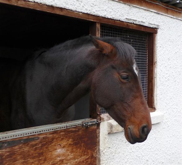 14.horse