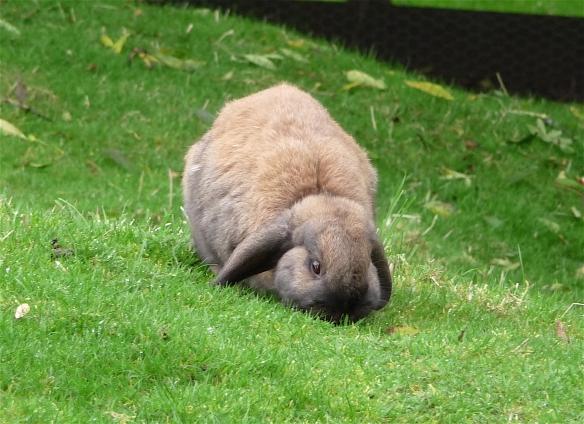 15.rabbit