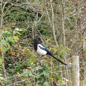 23.Magpie-Cosmeston Lakes