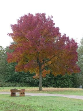 25.Autumn colour