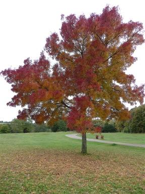 26.Autumn colour