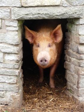 8.Pig