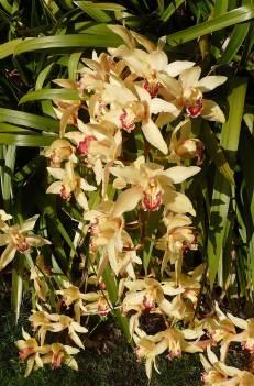 11-orchids