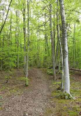 28-beech-forest