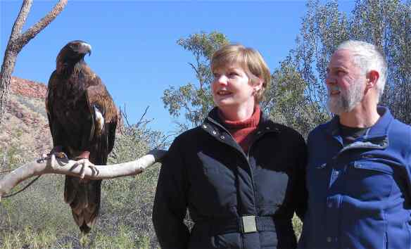 51-wedge-tailed-eagle