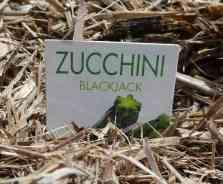 15-zucchini-sign