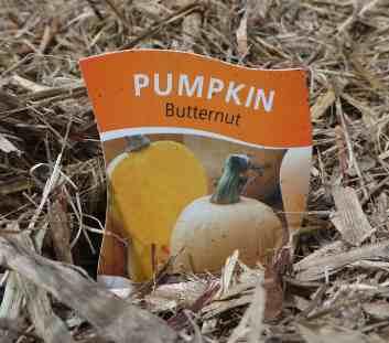 16-pumpkin-sign