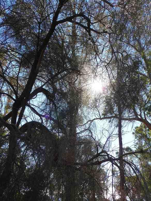 21-trees