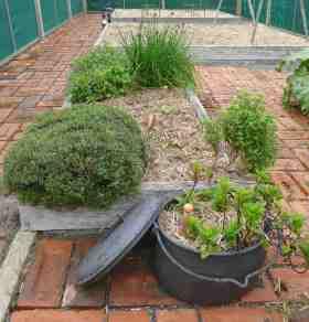 22-herbs