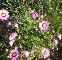 2-flowers