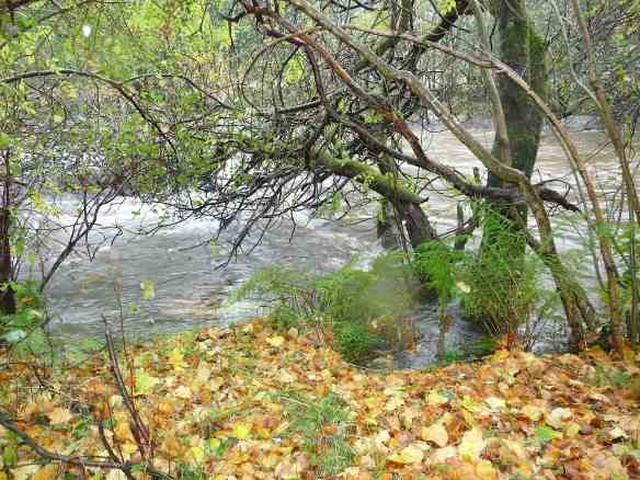2-river-luss