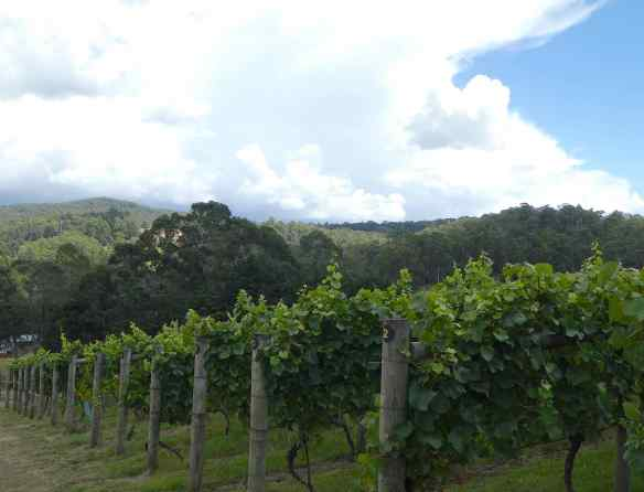 2-vineyard