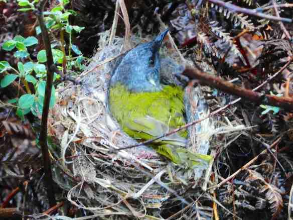 2.forest bird