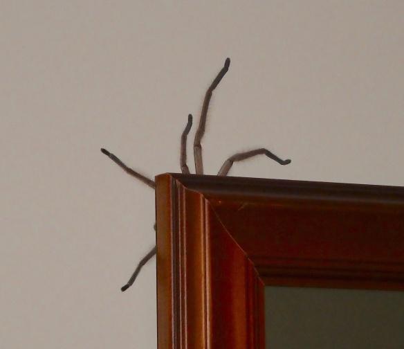 28.spider