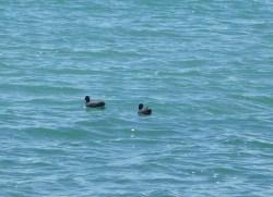 22.Lake Bolsena