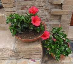 8.Assisi