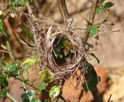 39.nest