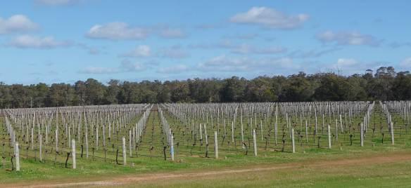 1.Watershed vines