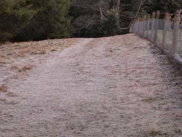 7.frosty paddock