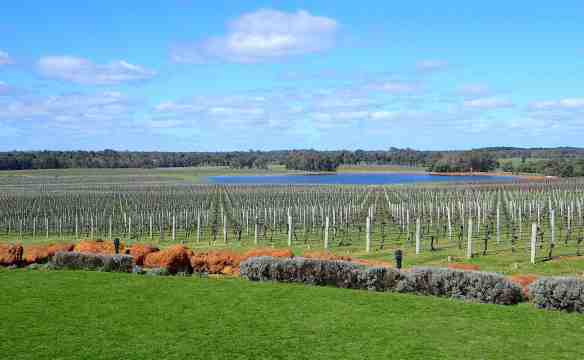 7.vineyard & dam