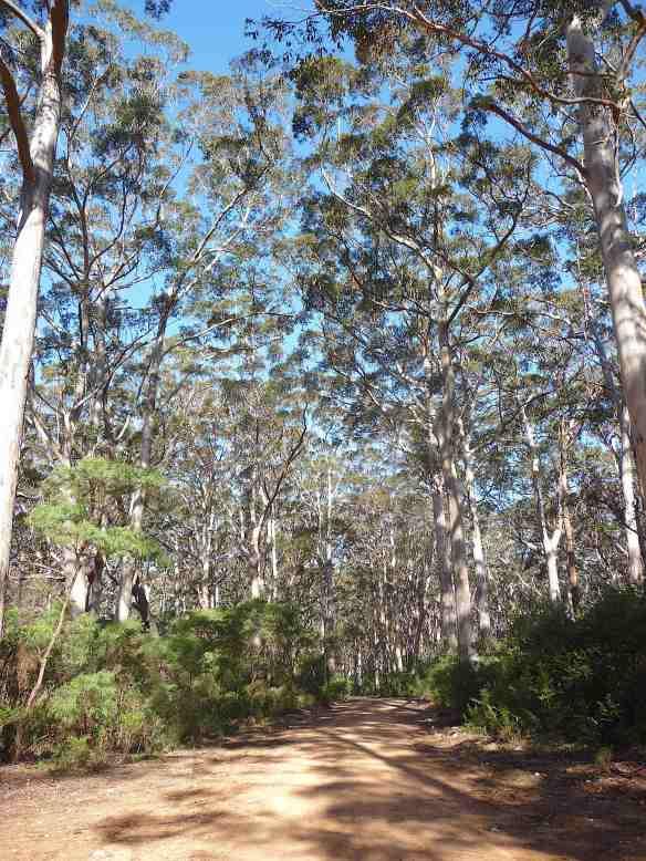 1.Boranup Karri forest