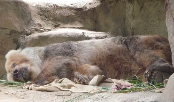 19.bear