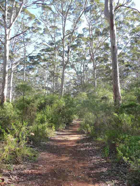 2.Boranup Karri forest