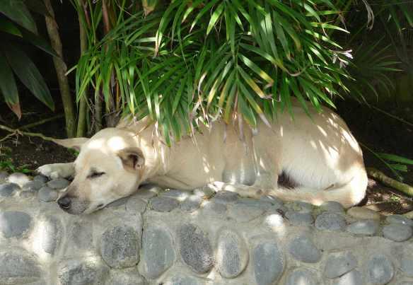 22.villa dog