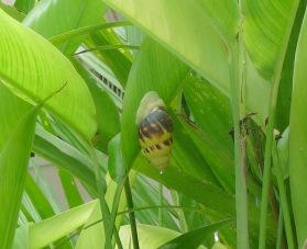 27.snail